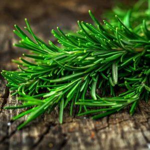 Rosemary 20 – ekstrakt rozmarynu 20% (kwas karnozowy)